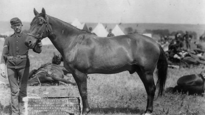 image of Comanche war horse
