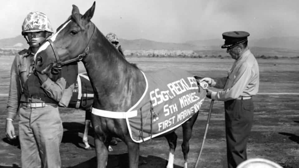 Sergeant Reckless horse photo