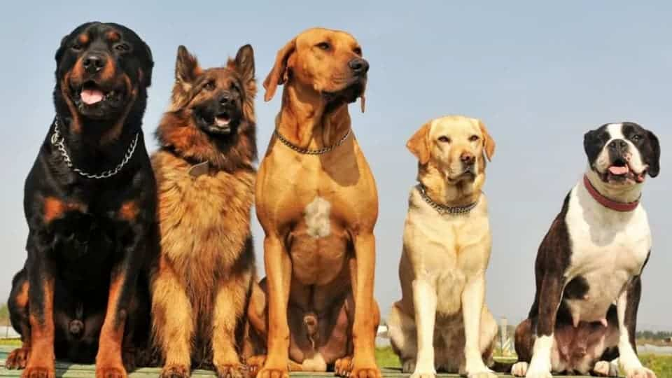 Best guard dog breeds for families with children