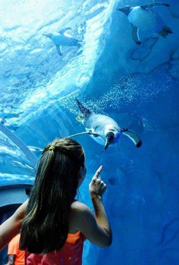 girl seeing penguin at Detroit Zoo