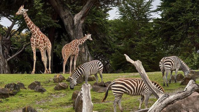 Top Largest Zoos in the World