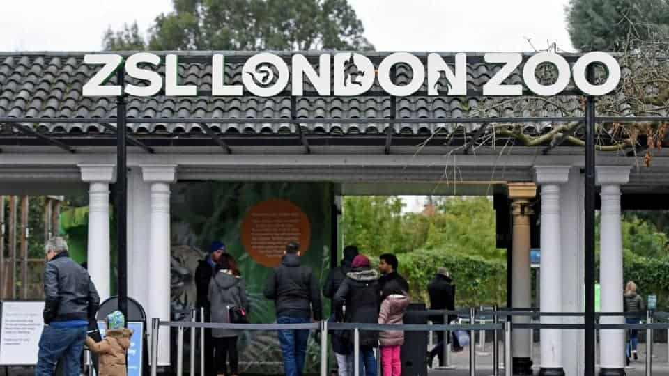 People purchasing tickets at London Zoo